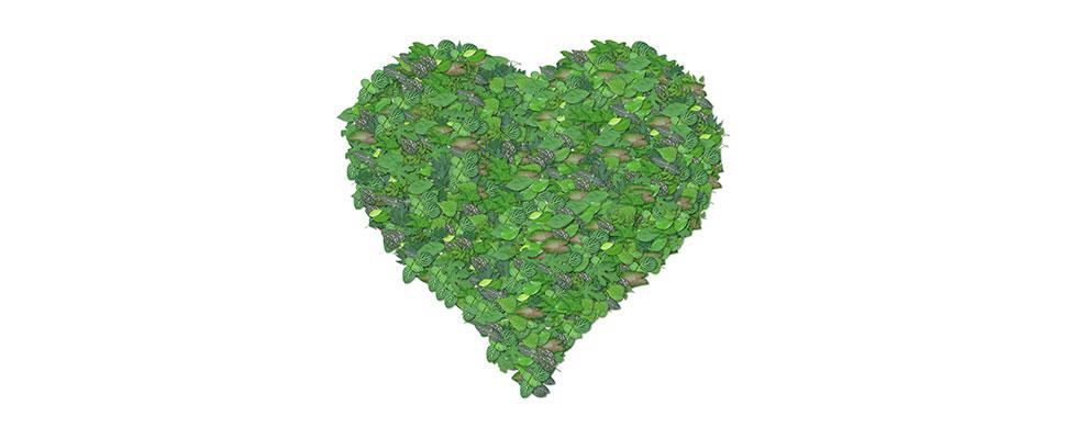green-heart-1440670_1280